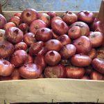 Onions4