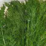 aromatics-herbs04