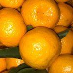 mandarin-02