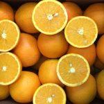 orange-04