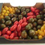 cherry-tomato2
