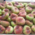 flat-peach02